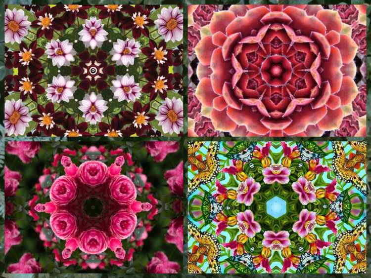 Mandala collage x4 7 -