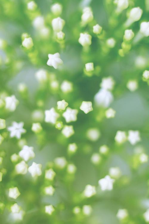 White Tenderness VI - Image 0