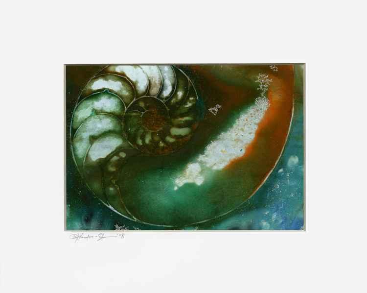 Nautilus Shell No.63 -