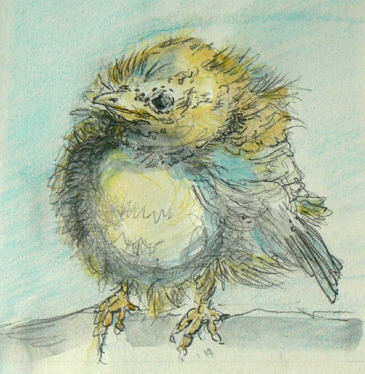 Baby Bluetit - Image 0