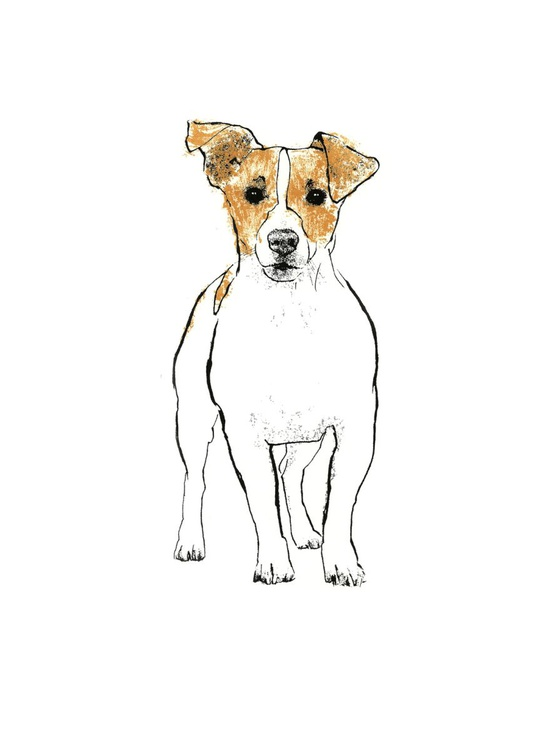 Jack Russell - Image 0