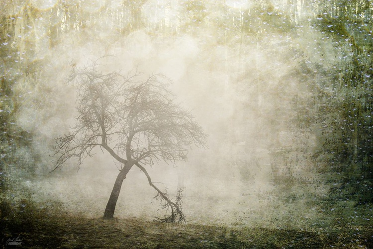 Silent witness of the mist - Image 0