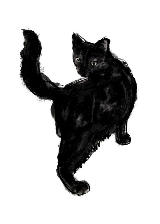 Black Cat - Image 0