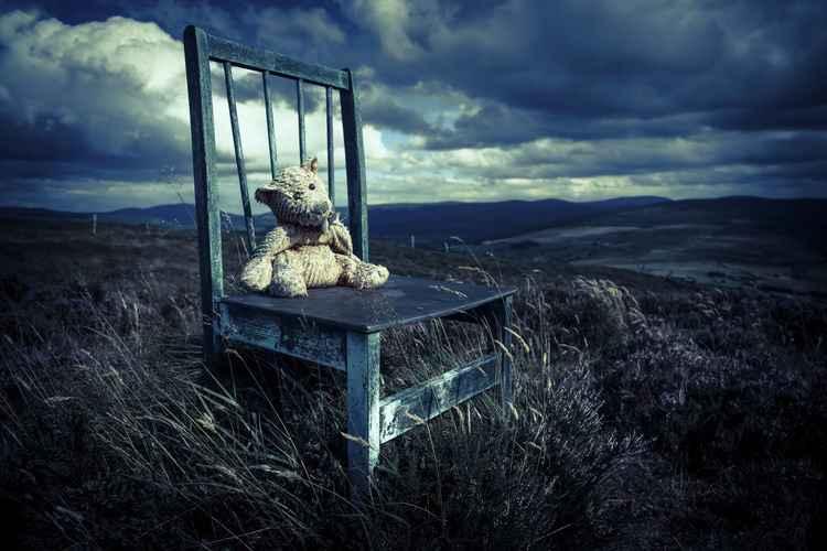 Teddy 5 -