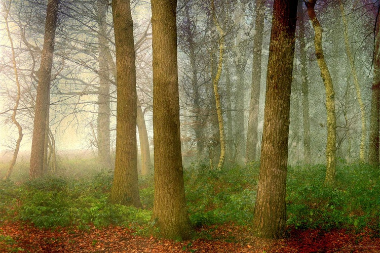 Pure Nature - Hahnemühle Photo Rag - Image 0