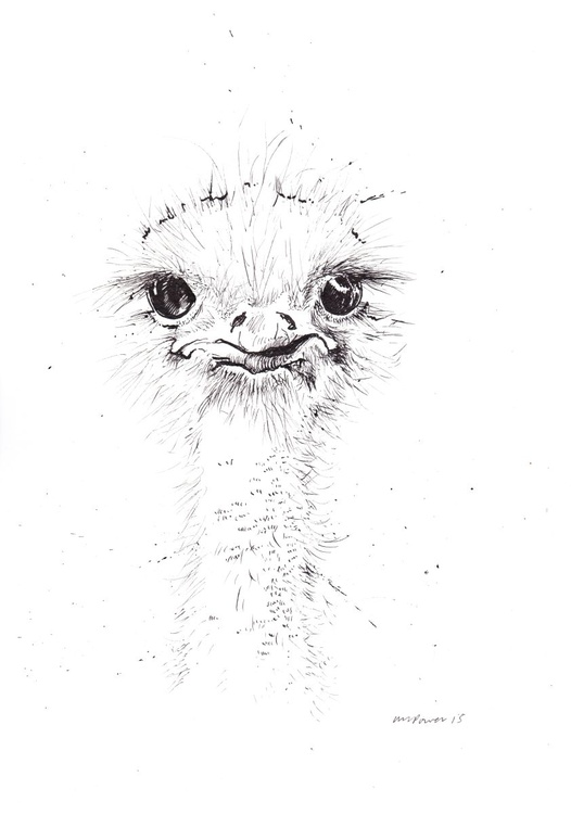 Ostrich intrigued - Image 0