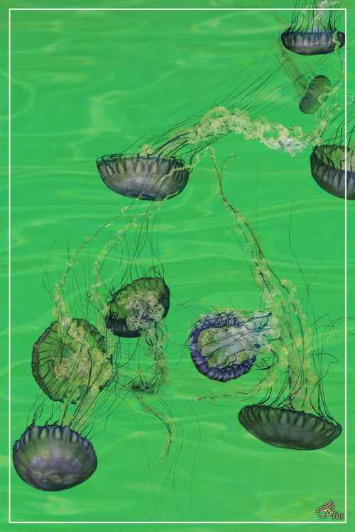 SYMPHONY No.9 - JELLYFISH IN GREEN