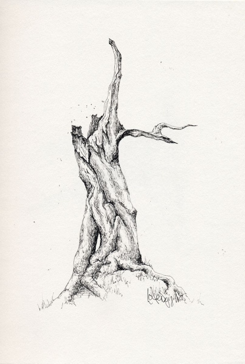 Tree #05 - Image 0