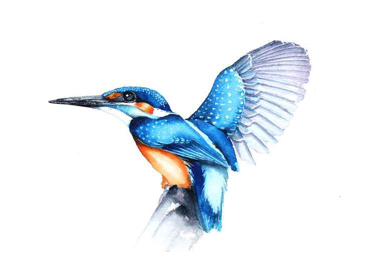 Kingfisher,  bird, birds, animals, wildlife watercolour painting -