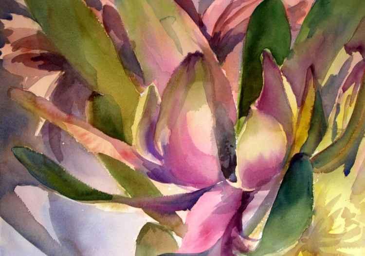Sunset Protea I -