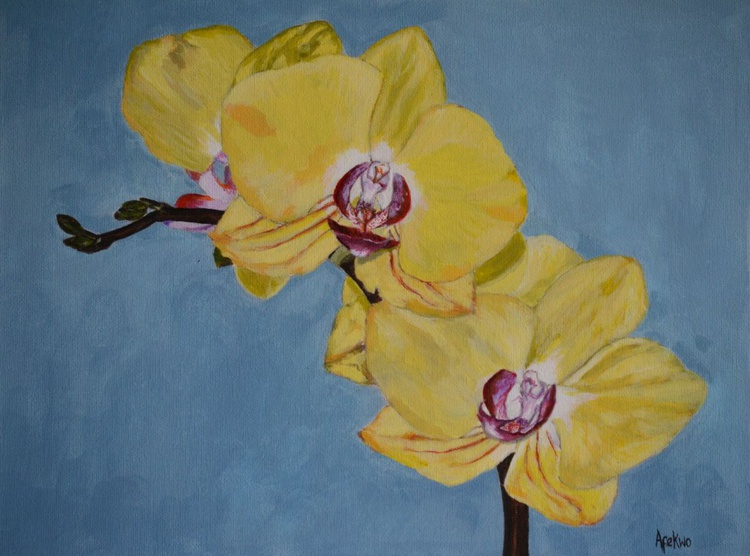 Yellow Orchid - Image 0