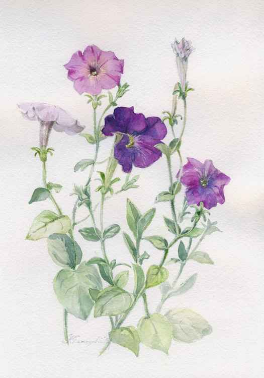 "Original watercolor ""Petunia 1"" -"