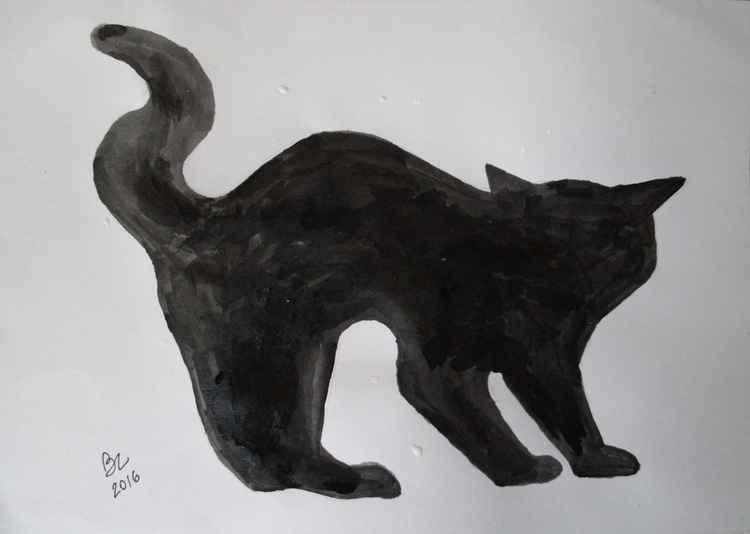 Cat 5 -