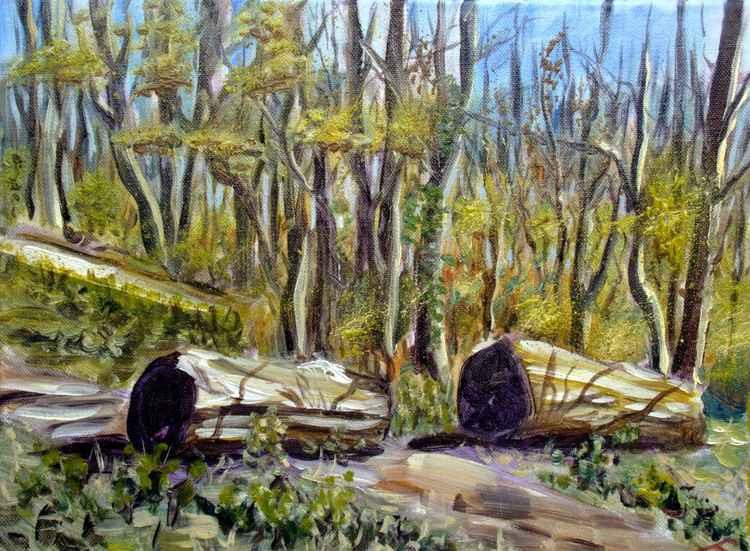 Spring forest -