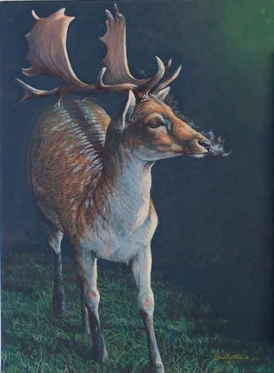 Fallow Buck -