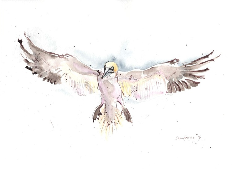 Landing Gannet - Daily Bird #54 - Image 0