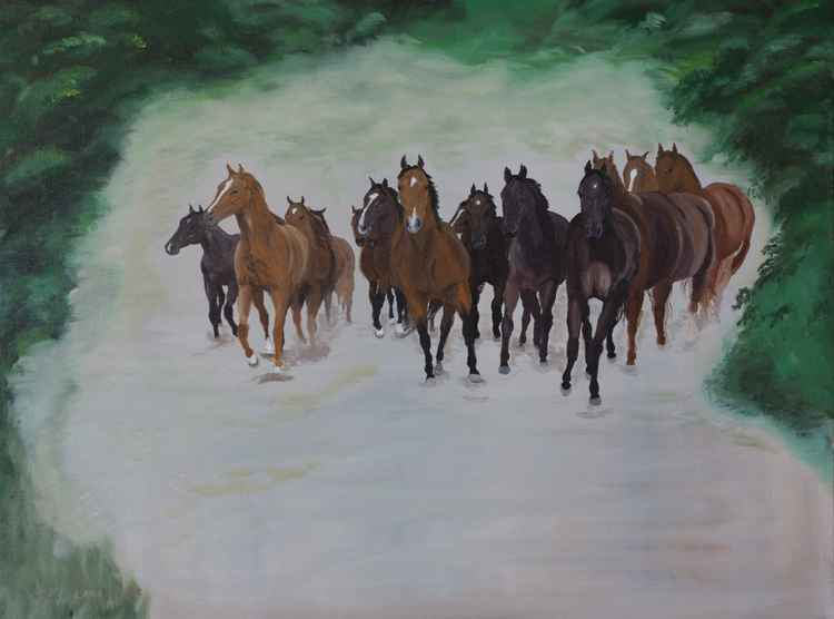 Herd of young horses in canter -