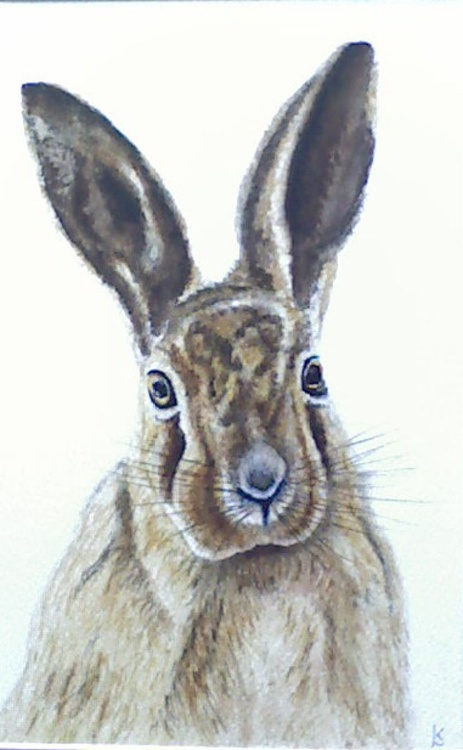 Hare Alert - Image 0