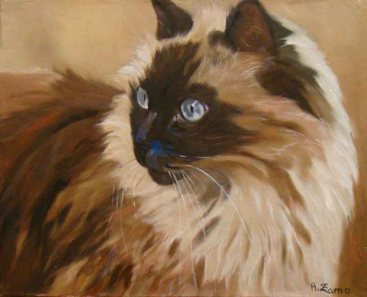 Ragdoll Portrait of Cat