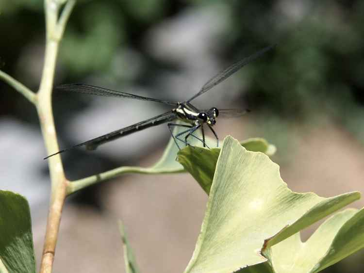 Dragonfly green -