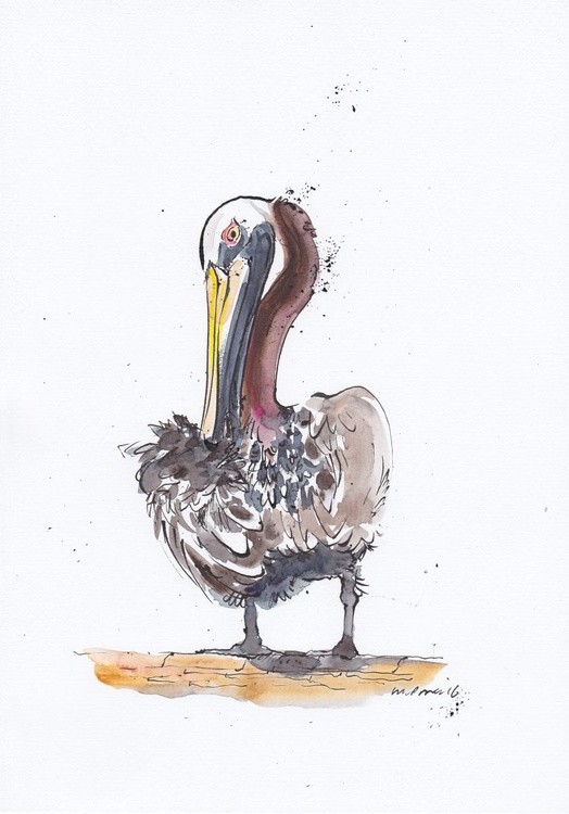 Brown Pelican - Daily Bird #12 - Image 0