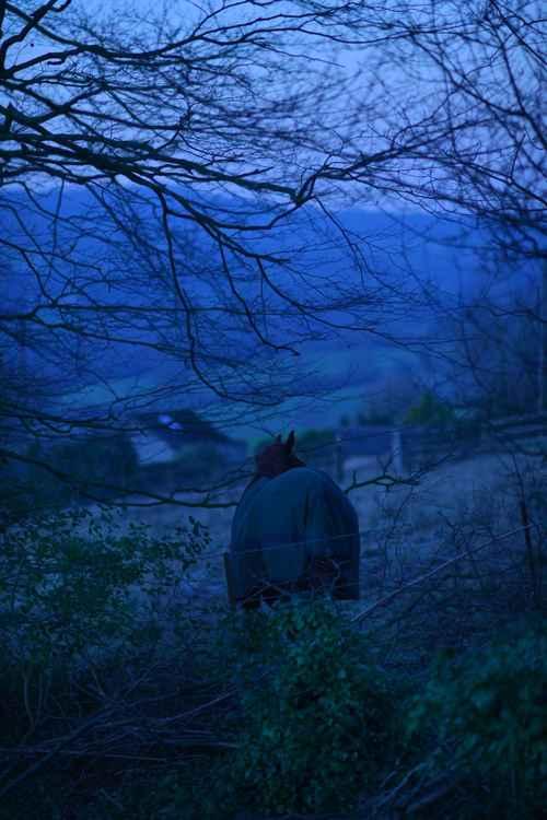Hidden Horse