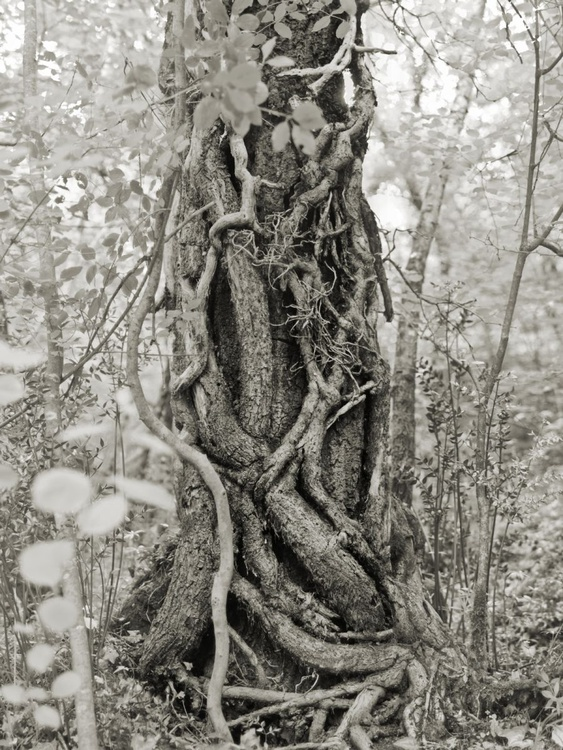 Veins and arteries of the tree - Image 0