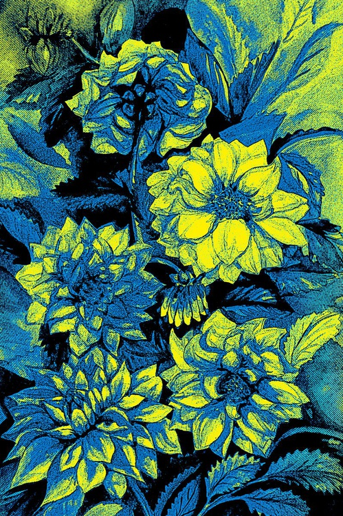 Chrysanthemums in blue and yellow - Image 0