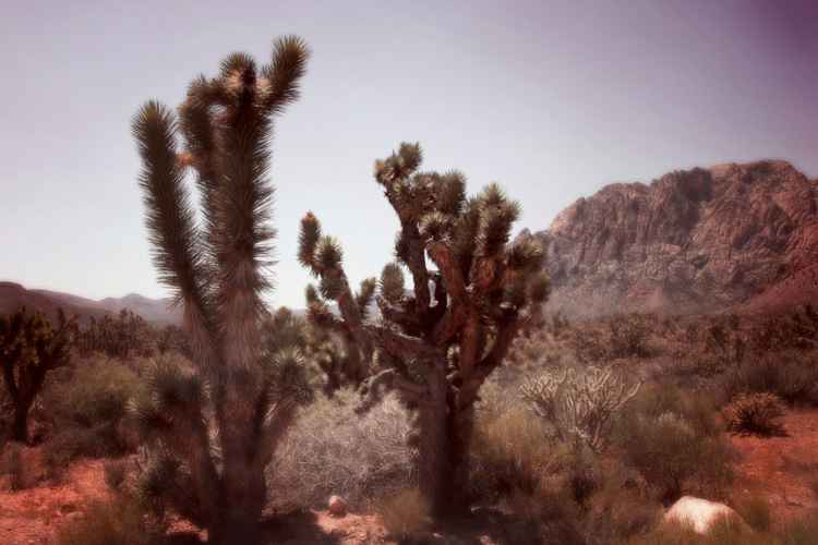 I Thought Of You In The Desert Today 5