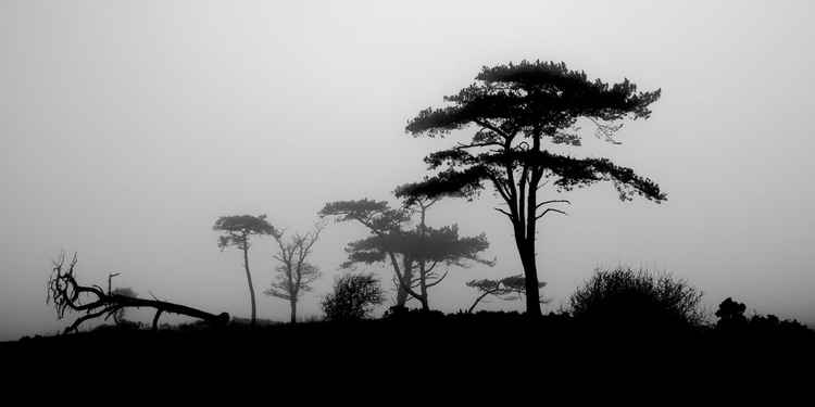 Trees in Mist, Coedana, Anglesey -
