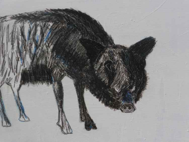 Wild Boar (with the tusks of a Warthog)