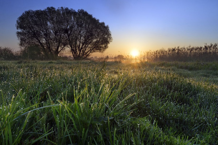 Meadow with tree in fog at sunrise - Image 0