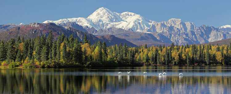 Denali Dreams -