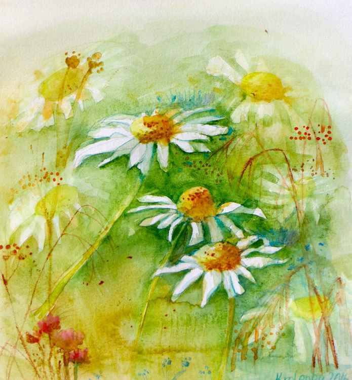 Meadow with daisy -