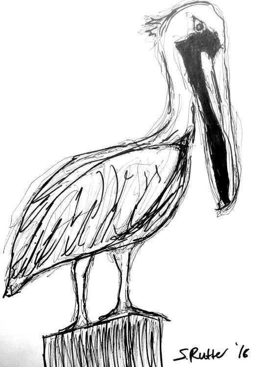 Mr Pelican -