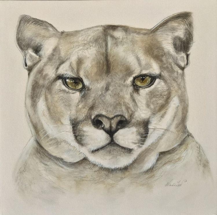 Mountain Lion - Image 0