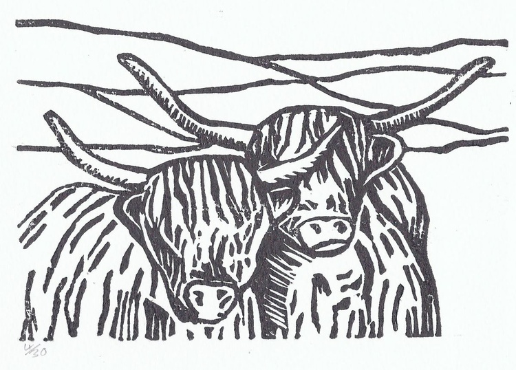 Pair of Highland' Coos - Image 0
