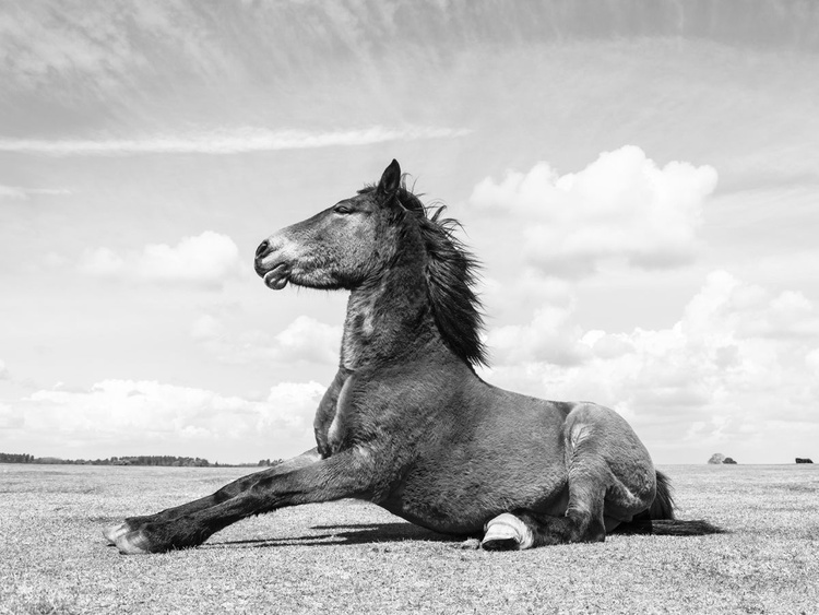 THE SITTING HORSE - Image 0