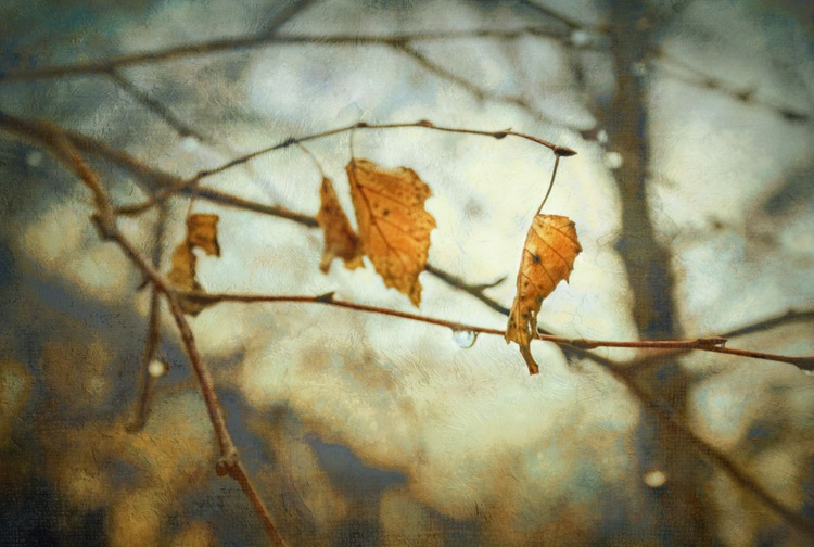Autumn plays the blues. - Image 0