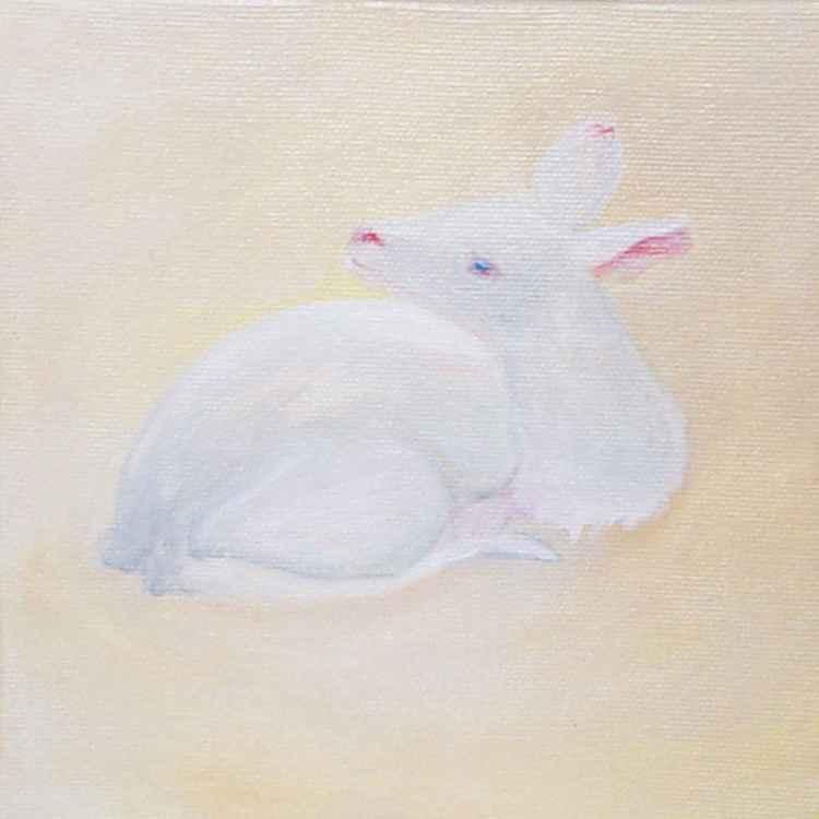 Albino bambi -