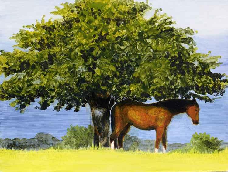 Common Horse -