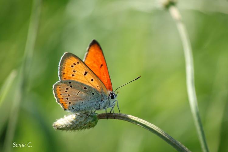 Orange - Image 0