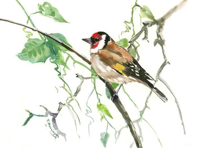 European Goldfinch -
