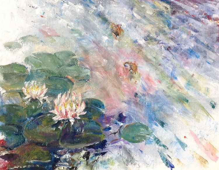 Nénuphars Roses,Pink Waterlilies -