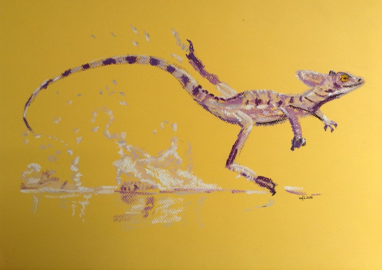 Purple pond skater - Image 0