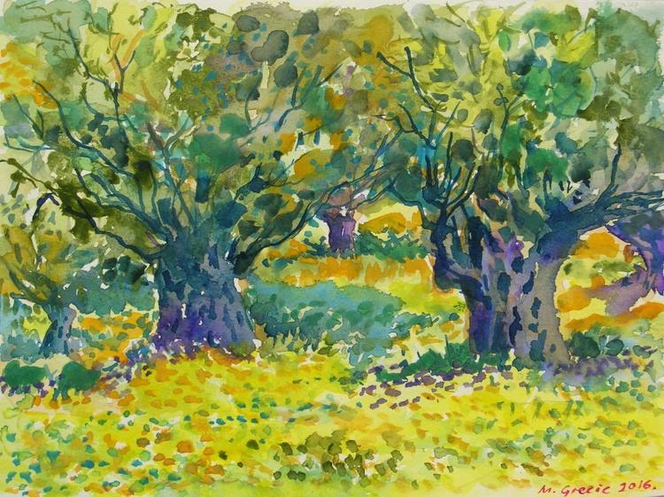 Olive trees - Image 0