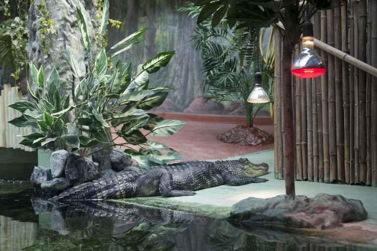 Crocodile in Pairi Daiza