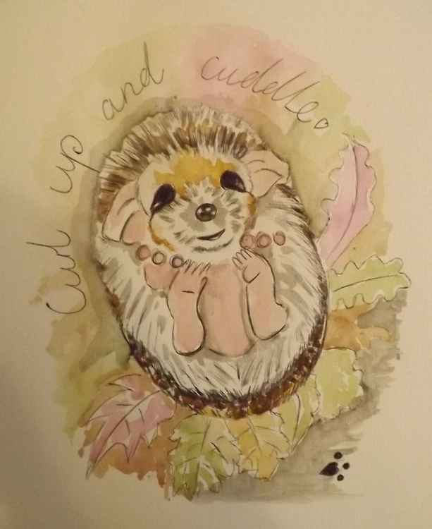 Curl up and Cuddle hedgehog -