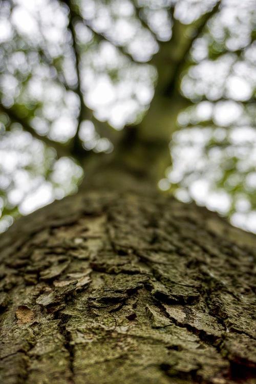 """SKY TREE  1/20 8""""""""X12"""" - Image 0"""