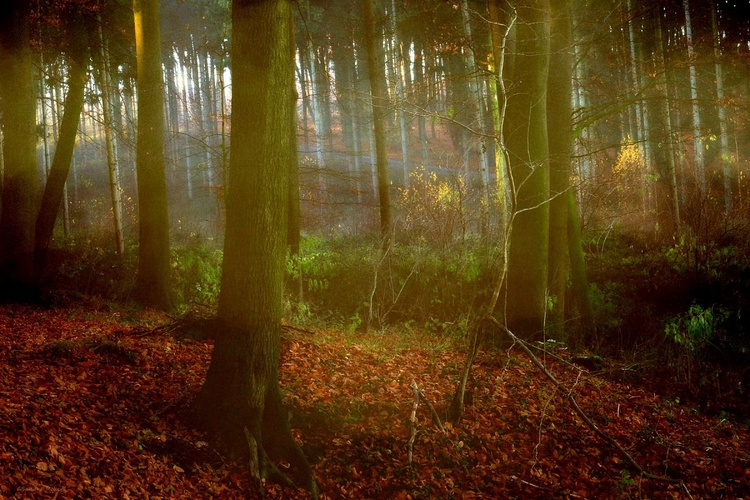 Magic Forest - Canvas 75 x 50 cm - Image 0